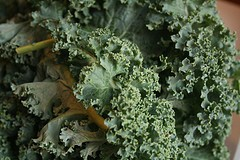 Kale (posted @ Flickr by the bittenword.com