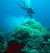 Scuba Diver In Ocean Image
