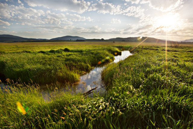 A narrow stream cuts through a field of tall green prairie grass. There are hills in the background. The sky is blue with puffy clouds and the sun is bright.