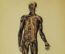 Image of the human body