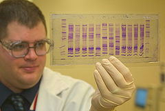 A U.S. Customs and Border Protection chemist reads a DNA profile to determine the origin of a commodity.