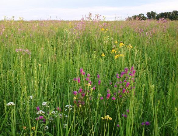 prairie, short grass, tall grass, iowa