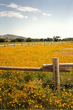 Wildflowers of Wichita Mountains