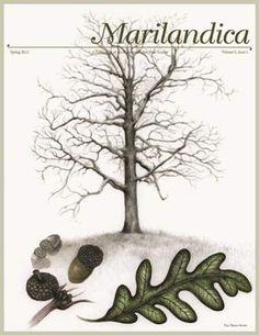 Marilandica Cover