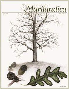 Marilandica Cover