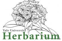 Yale Herbarium Logo