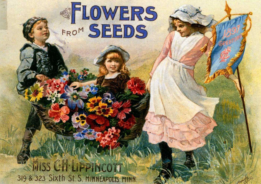 Flowers from Seeds Miss C.H. Lippincott