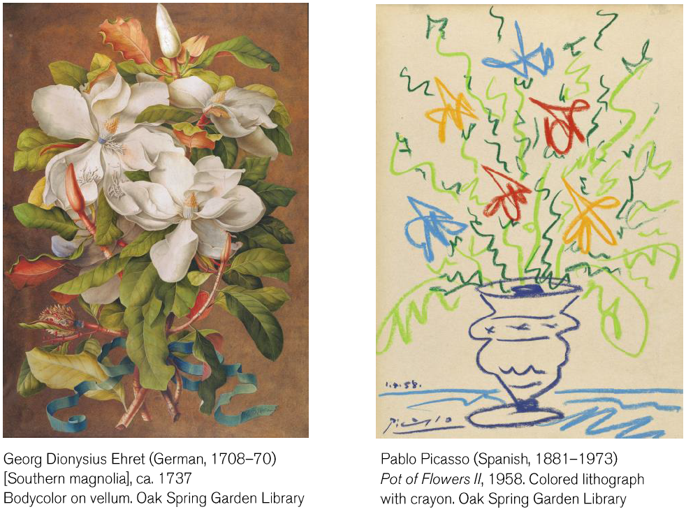 Southern Magnolia ca.1737 by George Dionysius Ehret and Pot of Flowers II 1958 by Pablo Picasso