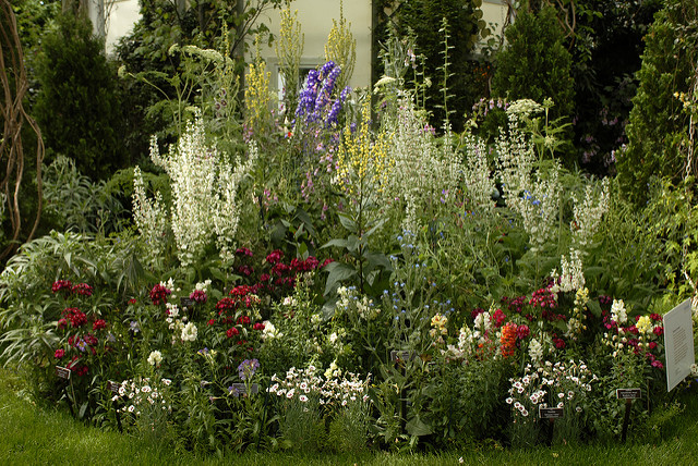 Garden displays diversity of color and form among flowers