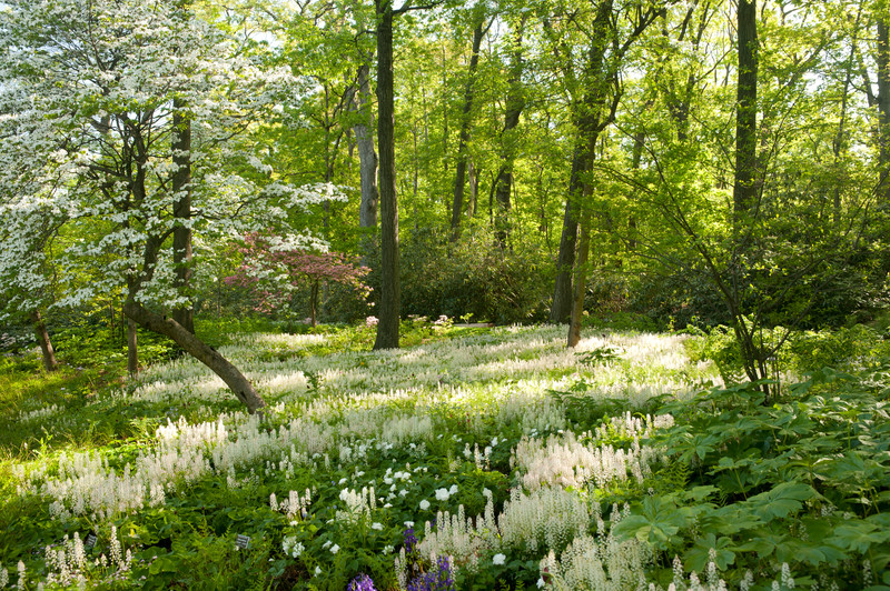 A Woodland Section of The Native Plant Garden at NYBG; photo by Ivo Vermeulen