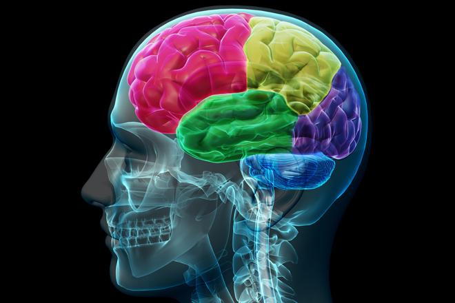 Brain lobes image