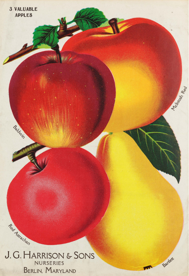 Apple varieties from J.G. Harrison and Sons Nurseries