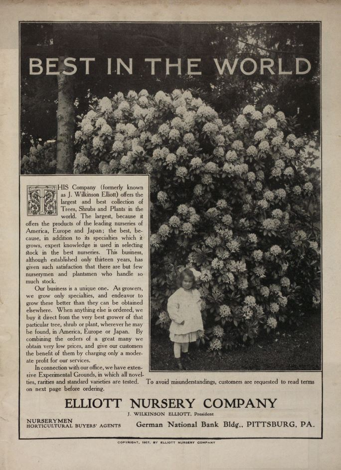 Baby girl and large flower bush on 1907 catalog