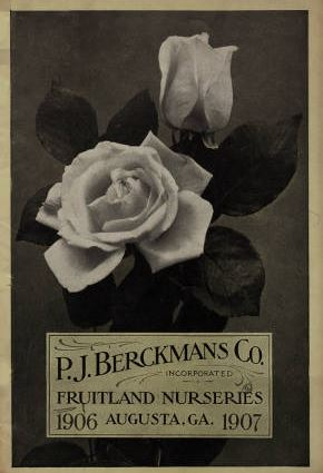 1906-1907 catalog with 2 roses