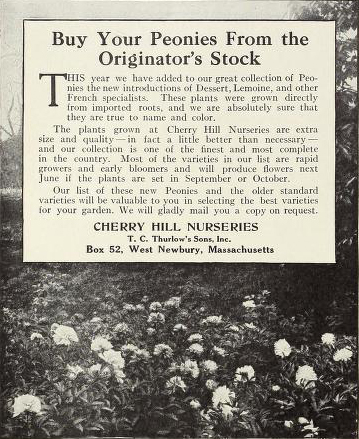 Peonies from Cherry Hill Nurseries