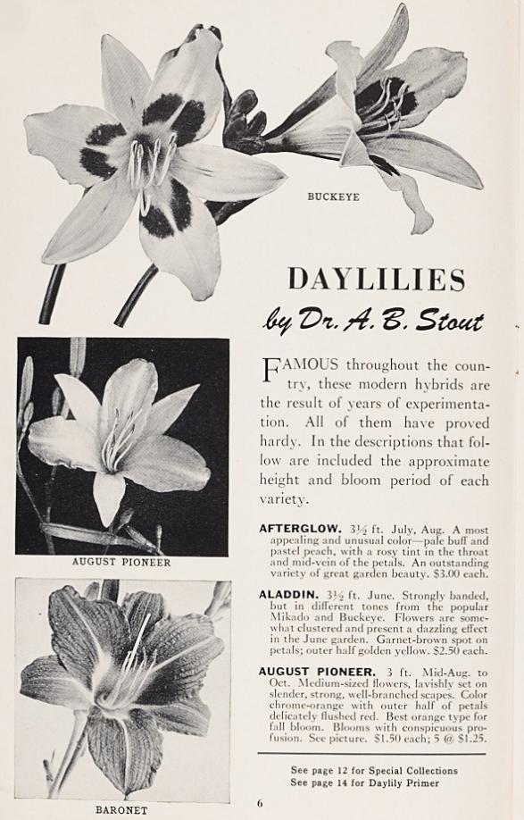Modern hybrid daylilies by Dr. A.B. Stout