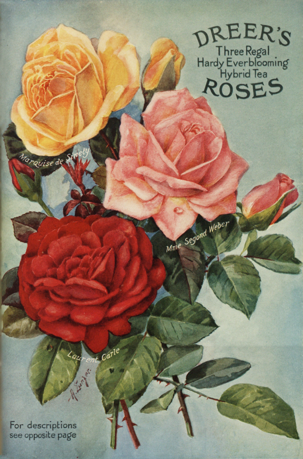Hybrid tea rose varieties from Dreer's Nursery