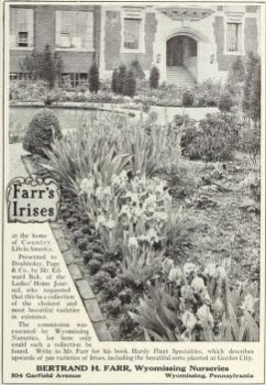 Farr's Irises