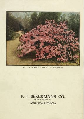 Pink Azalea indica bush on catalog back cover