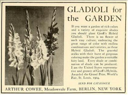 Gladioli for the Garden. Arthur Cowee
