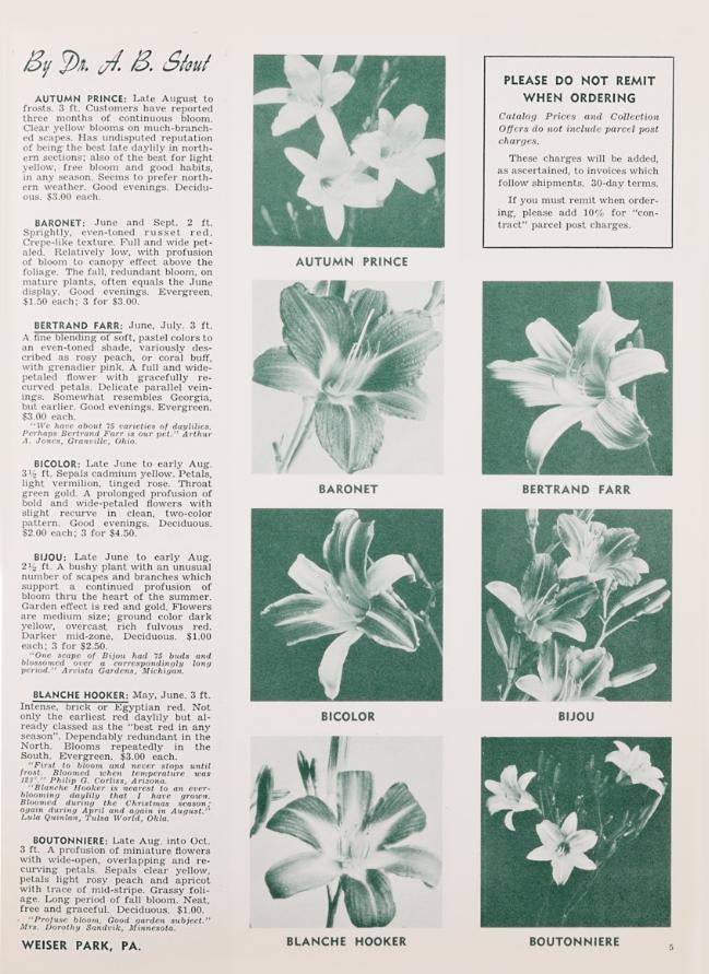 Descriptions of Dr. A.B. Stout daylily varieties Autumn Prince through Boutonniere