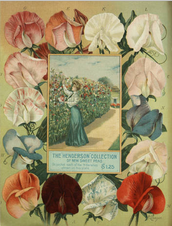 The Henderson Collection of New Sweet Peas