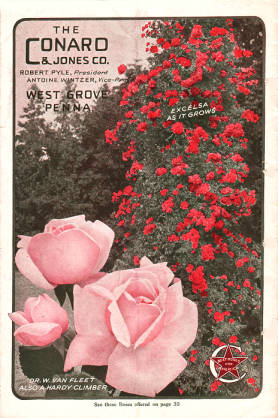 The Conard and Jones Co. climbing roses