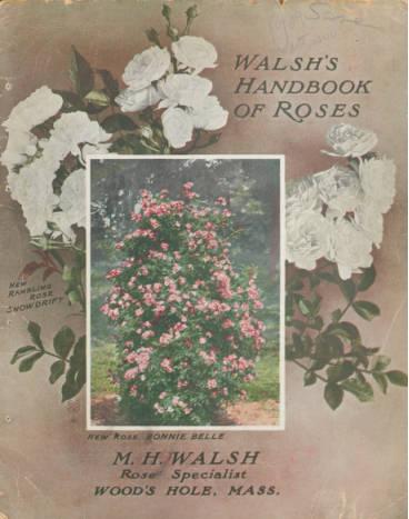 Walsh's Handbook of Roses