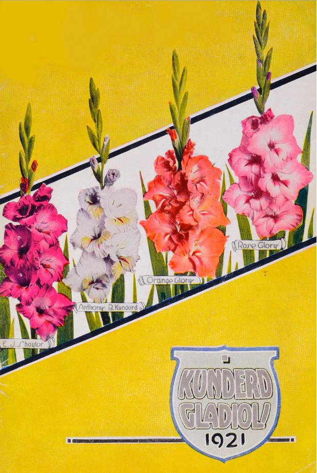 Kunderd Gladioli 1921