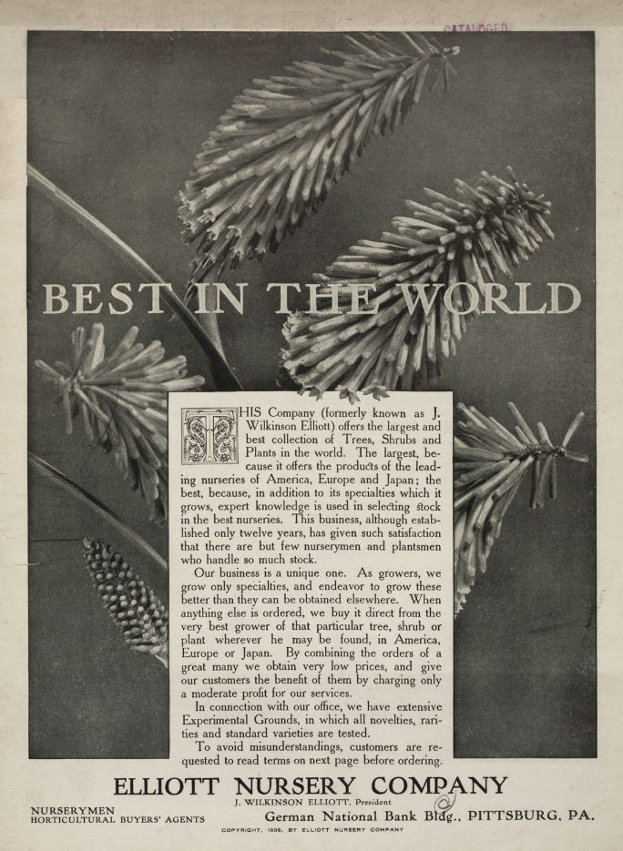 Pine tree on 1906 catalog
