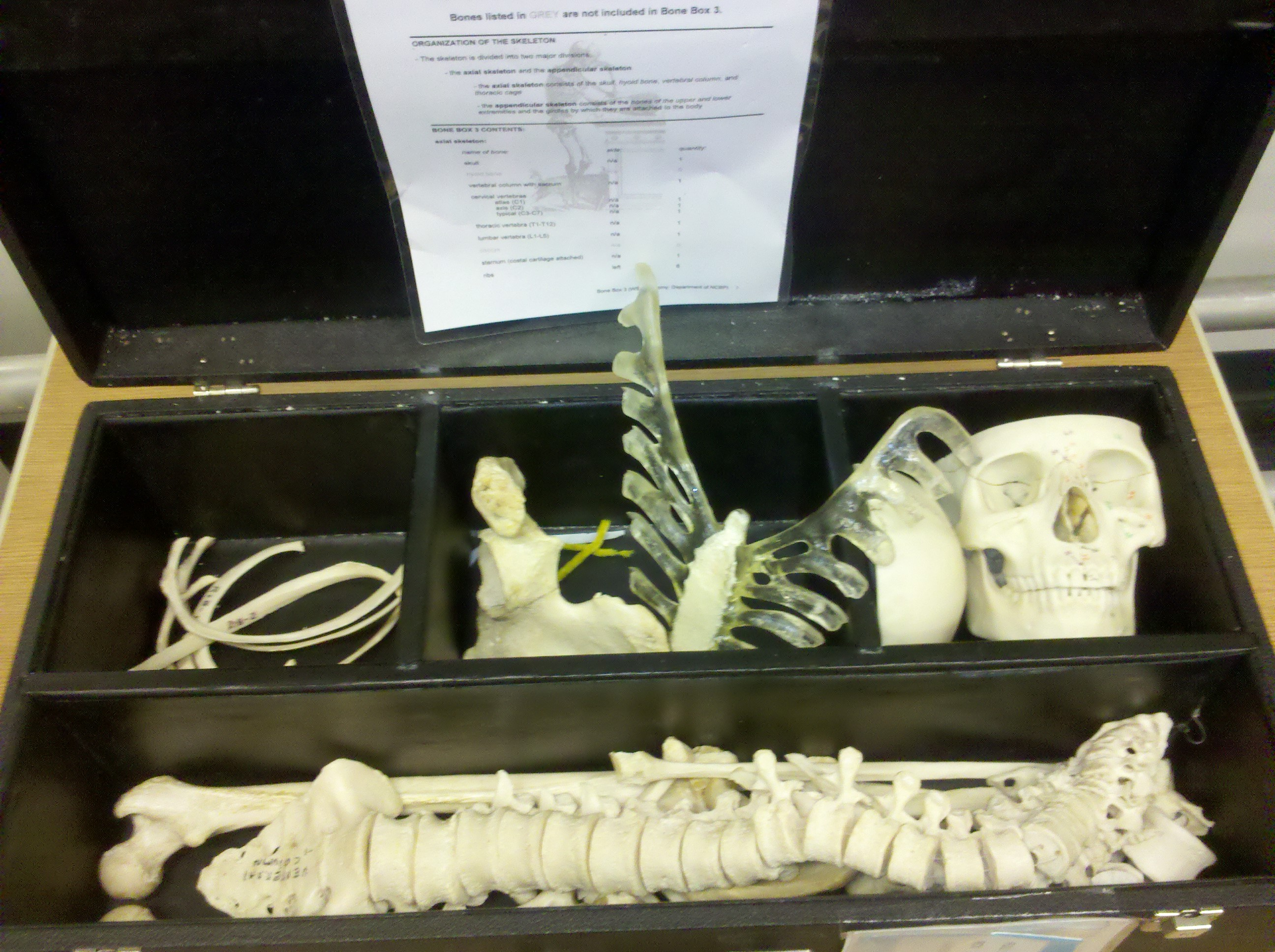 Image of bone boxes held at the circulation desk for student use