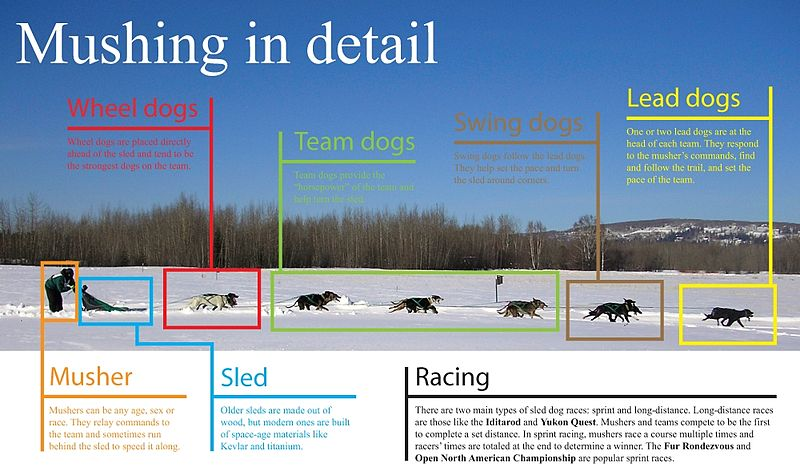 Elements of a sled dog team