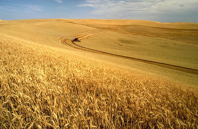 Wheat harvest on the Palouse.  Image courtesy of the Agricultural Research Service Photo Library.