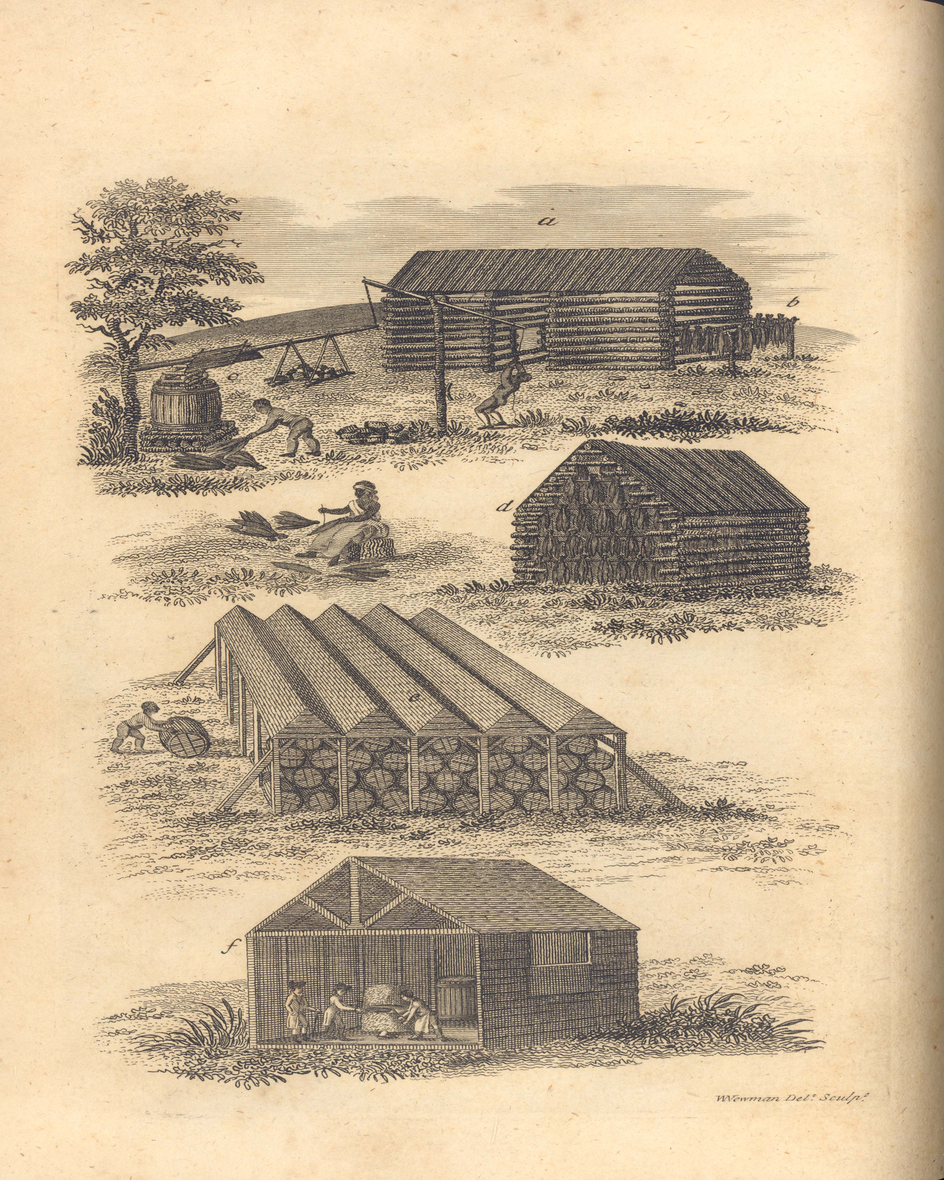 Tobacco houses from the book Tobacco by William Tatham (call number: Rare Books SB 374 .T21)
