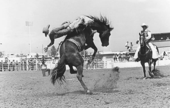 Saddle bronc rider - Calgary Stampede 1981