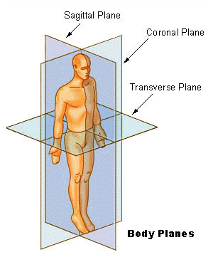 Picture of body planes