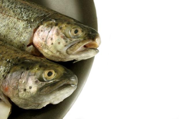 Photo of 2 fish