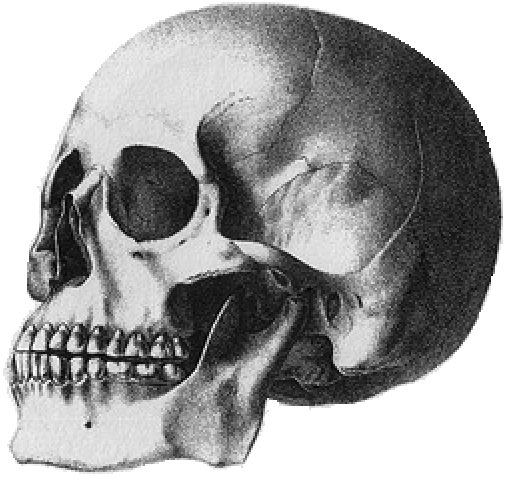 skull of the Puelche people of Patagonia.