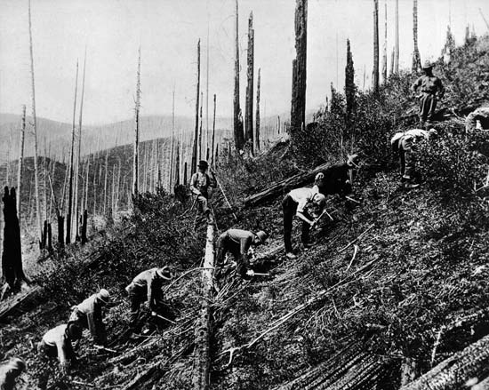 Photo of men in Civiliation Conservation Corps clear brush off a hillside as part of a reforestation project in the 1930s.
