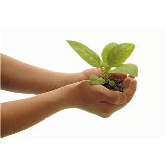 hands hold a seedling plant