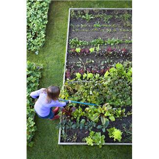 backyard vegtable garden