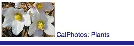 CalPhotos logo
