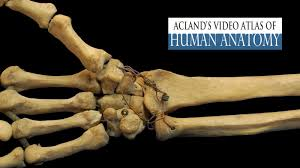 Aclands Video Atlas of Human Anatomy