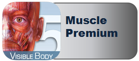 Muscle Performance Logo