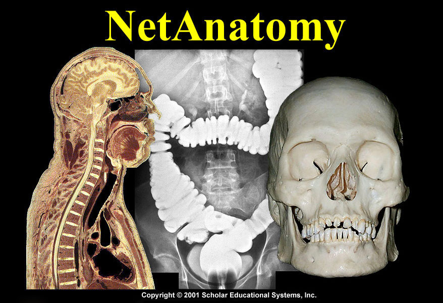 NetAnatomy Logo
