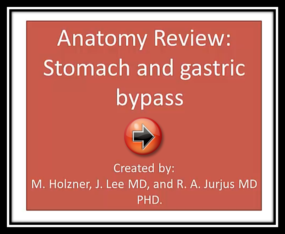 Anatomy Review: Stomach and Gastric Bypass Image