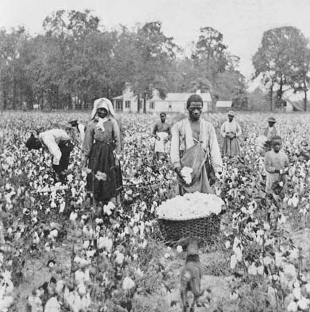 Black Sharecroppers Picking Cotton in Georgia by T.W. Ingersoll 1898
