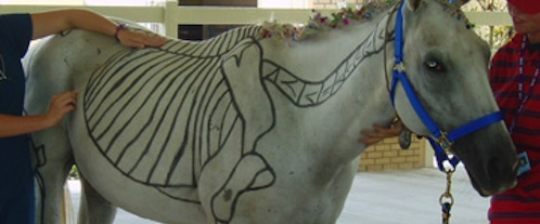 Image of a horse with anatomy drawn on his side.