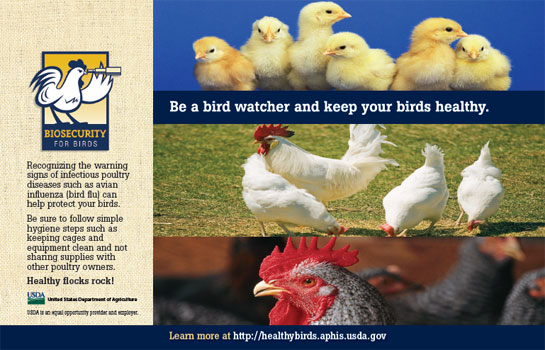"""Be a bird watcher and keep your birds healthy"" brochure about chickens"