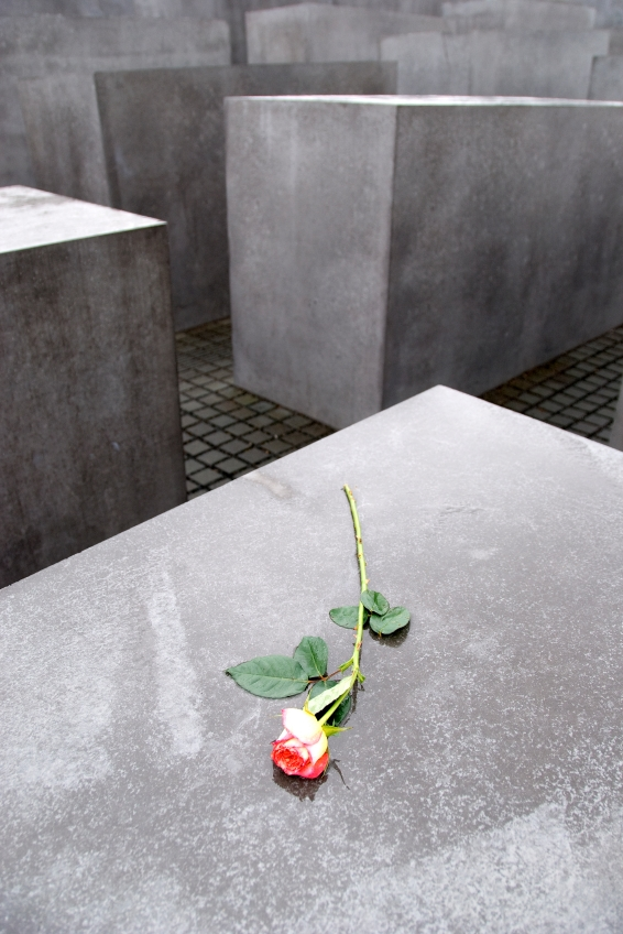 image of rose on Holocaust memorial